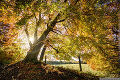 Autumn colours (EVERY SO OFTEN) Tags: autumn fall flare tree beech woodland outdoors landscape pulpit wood chilterns england buckinghamshire wide angle sonya7r sony e1018mm fence field hdr onlythebestofnature