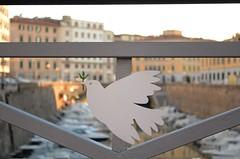 """peace and love"" (iuri68) Tags: iuri68livornopacecolombanikon d70002016 scali degli olandesi"