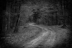 *** (pszcz9) Tags: polska poland przyroda nature natura parknarodowy biebrzaski nationalpark las forest droga road pejza landscape beautifulearth sony a77 wiosna spring bw blackandwhite monochrome czarnobiae