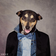 Fonzie (tswarek) Tags: shelterpetsproject rescue dogs dog adoptable fashion couture high caps regal beautiful floral flowers feathers fonzie catori tammy swarek tammyswarek photography portrait art fine fineart bowtie denim style stylish ontrend trendy glamour shelter