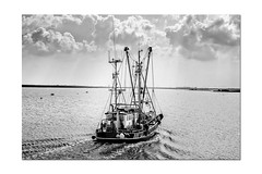Zurück vom Fang (jenswagner) Tags: fischkutter schiffe schiff greetsiel ostfriesland niedersachsen deutschland leyhörn speicherbecken bw schwarzweis