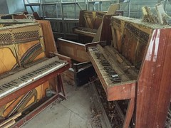 Pripyat Piano Shop-(Chernobyl Exclusion Zone)_7 (Landie_Man) Tags: none pripyat chernobyl looted looting disused closed music piano pianist culture bars beats frets instrument grand fine radioactive radiation ionising shop store shut buy bought purchased forgotten play nuclear power plant the zone ukraine ussr cccp ccpp soviet union