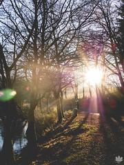 Afternoon Walk (Mark Hosmar) Tags: luxembourg outdoor nature love autumn walk dok dog iced lake sunray sun sundown olympus