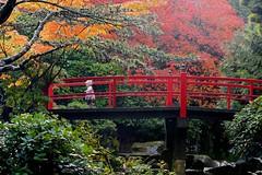 Autumn Walk on the Heart Bridge (Aurora Santiago Photography) Tags: heartbridge kubotagarden seattle washington japanesegarden littlegirl toddlerwalking