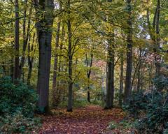 Moorlands (alh1) Tags: yorkshirewildlifetrust naturereserve england northyorkshire york autumn