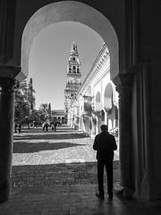 Patio de la Mezquita Catedral de Córdoba, Andalucía, Spain (Angel Talansky) Tags: campanario cordoba mezquita turismo monumento catedral andalucia spain torre alminar ciudad capital patio naranjos turistas patiodelosnaranjos mosque mosquée moschee 1000