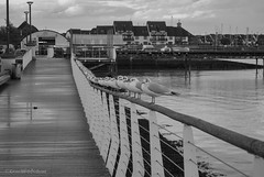 perched (sure2talk) Tags: seagulls 7daysofshooting week20 repetition blackandwhitewednesday nikond60 nikkor1855mmf3556afs hythe perched