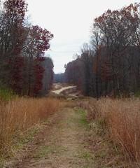 Pipeline cut at Ireland Brook Conservation Area (Dendroica cerulea) Tags: trail path pipelinecut meadow autumn irelandbrookconservationarea eastbrunswick middlesexcounty nj newjersey