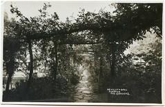 Newlyn & Ball's Tuckton Tea Gardens, Belle Vue Road, Tuckton, Bournemouth, Dorset (Alwyn Ladell) Tags: dorset bournemouth tuckton bellevueroad tucktonteagardens newlynball ernestbenjaminbailey pergola