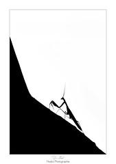 Mountain Warrior (Naska Photographie) Tags: naska photographie photo photographe paysage proxy proxyphoto macro macrophotographie macrophoto black white monochrome ombre chinoise chinoiserie silhouette mante religieuse mantidae noir et blanc