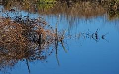 Still Water (vtpeacenik) Tags: missisquoinationalwildliferefuge autumn november vermont