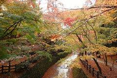 DSC02802 (MrSUIZOU) Tags: 京都 紅葉 北野天満宮 平野神社 十月桜