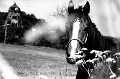 Horse (newfilm.dk) Tags: blackandwhite bw horse mill nature animals denmark farm farming natur oldmill danmark hest naturescenery djursland
