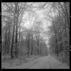 Winter V (elkarrde) Tags: yashinon80mm135 80mm kodaktrix400400tx kodak trix 400 tx 400tx kodakxtol xtol blackandwhite blackwhite yashica yashicamat124g tlr twinlensreflex mediumformat film monochrome monochrom noiretblanc square 6×6 2010 winter winter2010 forest woods trees snow road twop canoscan 8800f canoncanoscan8800f canoscan8800f vuescan mediumfilm
