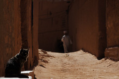 Cat and muslim man in Tinghir, Morocco (Simon Christiaanse) Tags: africa street man cat dof muslim morocco medina neighbourhood tinghir ocher djellaba  simonchristiaanse