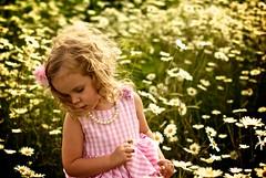 Lucy 3 (DJHuber) Tags: birthday old pink flowers girl daisies children three lucy kid child dress daisy threeyear