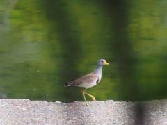 (Polotaro) Tags: bird nature pen olympus  zuiko  5    2013   fzuiko300mmf45 epm2
