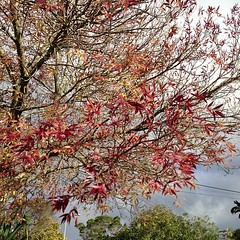 Autumn 2013, Auckland, New Zealand (david.lim) Tags: square squareformat iphoneography instagramapp uploaded:by=instagram