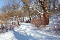 High Park Snow (hogtown_blues) Tags: winter snow toronto ontario canada nature highpark parks snowfall torontoparks