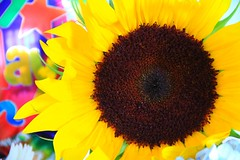 Sunflower (Photos By RM) Tags: birthday sun flower yellow happy sunflower