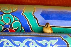 "pajarito • <a style=""font-size:0.8em;"" href=""http://www.flickr.com/photos/92957341@N07/9598628374/"" target=""_blank"">View on Flickr</a>"