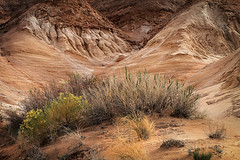 Dunes With Brush (arbyreed) Tags: sand sandstone desert dunes desertbrush arbyreed emerycountyutah