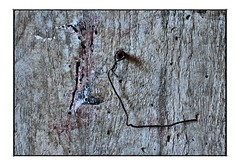 wall rusty and nail (swe_actor) Tags: pictures wall idea herrumbre rust nail rusty konst excellent