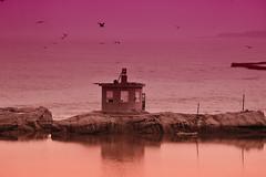 Rushan Coast () Tags: lens nikon sony naturallight manual nikkor manualfocus seaview ais nex5r aisnikkored180mm28