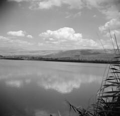 Lake Hula (Ilya.Bur) Tags: camera bw 6x6 israel iii fujifilm medium format neopan agfa heights f28 folding golan acros mthermon isolette 75mm caffenol solinar caffenolcl