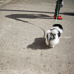 New York, United States of America (monsieur I) Tags: world travel dog pet newyork america us manhattan unitedstatesofamerica bigapple monsieuri