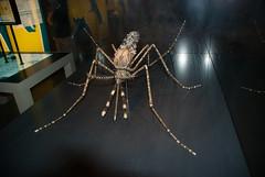 Model of a mosquito (quinet) Tags: berlin germany model mosquito modell museumofnaturalhistory 2010 mücke moustique museumfürnaturkunde langenachtderwissenschaften camera:model=nikond80 geo:country=germany geo:city=berlin geo:state=berlin exif:focallength=18mm camera:make=nikoncorporation exif:make=nikoncorporation exif:model=nikond80 exif:lens=180700mmf3545 exif:aperture=ƒ40 exif:isospeed=400 geo:location=berlingermany longnightofscience
