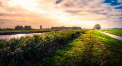 Wieringerwaard (NL) (D.ROS) Tags: wieringerwaard landscape green blue magenta water canal grass tree sky clouds sun light dark 3xp hdr color vibrant white netherlands schagen meadow road street way surreal supershot