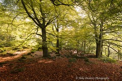 Padley Gorge (dunlevy1) Tags: dunlevy1 cannon5dsr distagont2815 padley autumn autumncolours beautiful sunlight peak district derbyshire