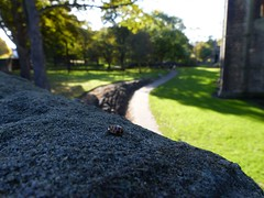 P1150903 - Ladybird by the abbey (sbrad1977) Tags: ladybird foreground kirkstall abbey path