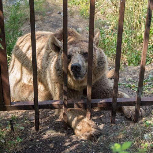 Медведь Тимошка
