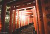 Thousand gates (Steffen Walther) Tags: japan reise steffenwalther reisefotolust travel kyoto city gates tori shinto canon5dmarkiii fushimiinari fushimi sunset orange walk thousandgates religion canon1740l