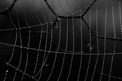 ...WetWeb... (7H3M4R713N) Tags: raynox 35mm fujifilm fujinonxf35mmf2 macro proxy automne fall monochrome blackandwhite bw nature outdoor drop web