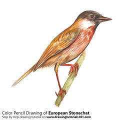 European Stonechat with Color Pencils [Time Lapse] (drawingtutorials101.com) Tags: european stonechat birds animals sketching pencil sketch sketches drawing draw speeddrawing timelapse timelapsevideo coloring color how