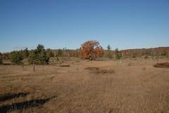 DSG_7388 Panorama 1 of 6 at Photo Post #2 (Greying_Geezer) Tags: 2016 hazelbird ncc natureconservancyofcanada hamiltontownship ort hiking naturereserves hazelbirdnr2