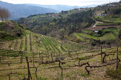 Tormes (JOAO DE BARROS) Tags: portugal joo barros landscape tormes vineyards