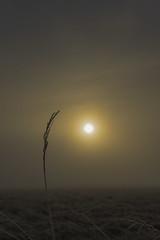 PB260032 2048 (Dirk Buse) Tags: mnster nordrheinwestfalen deutschland deu ms rieselfelder nebel klte feuchtigkeit luft sonne outdoor natur nature himmel sky fog olympus zuiko em1 mft m43 omd nrw germany farbe stimmung licht lichtstimmung 124028 1240 pro