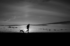 Moonwalk (Dan-Schneider) Tags: blackandwhite bw monochrome minimalism mood beach silhouette schwarzweiss sun sunset olympus omdem10 sky dog