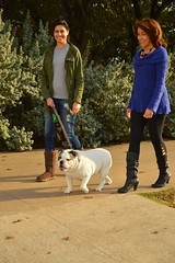 Taking the dog out (radargeek) Tags: waco tx texas downtown dog bulldog boots