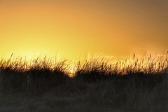Dawn of a new day (Nick Fewings 4.5 Million Views) Tags: head hengistbury dorset nickfewings colours golden november day pleasure joy simplicity simple natural nature grass sun dawn sunrise