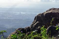 DSC04377 (stones in my shoes) Tags: cebu dayhike kanirag mtkanirag philippines siraopeak