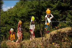 Water.   Ooty (Claire Pismont) Tags: asie asia inde india ooty ootacamund fetching woman women water pismont clairepismont travel travelphotography tamilnadu documentory nature viajar voyage