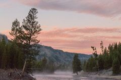 Misty Morning Elk Crossing (andrewshaffer) Tags: elk fishing flyfishing mist montana mountains nature outdoors sunrise usnp water wyoming yellowstone ynp