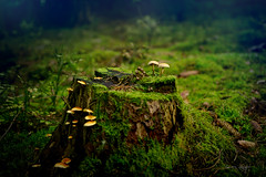 Mushrooms in foggy forest (lionbit76) Tags: fog forest outdoors nopeople foggy nature mushrooms outdoor macro sunset fineart