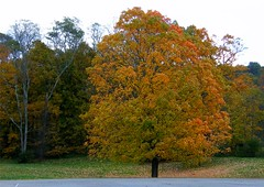 Dying Autumn (Stanley Zimny (Thank You for 21 Million views)) Tags: dying autumn fall tree orange