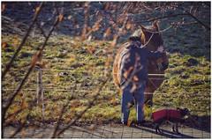 the tender touch (***étoile filante***) Tags: horse pferd old alt dog hund animal tier tender touch berührung soulful emotions oldwoman woman frau emotional